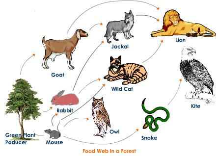 food-web-forest